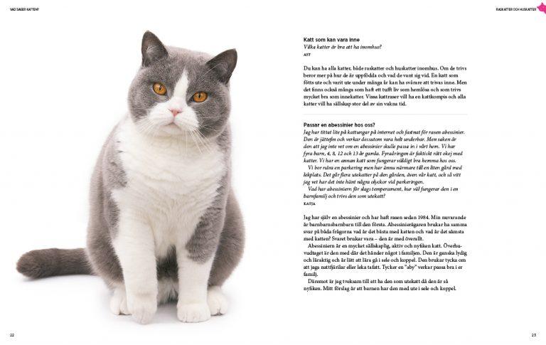 Vad säger katten - inlaga